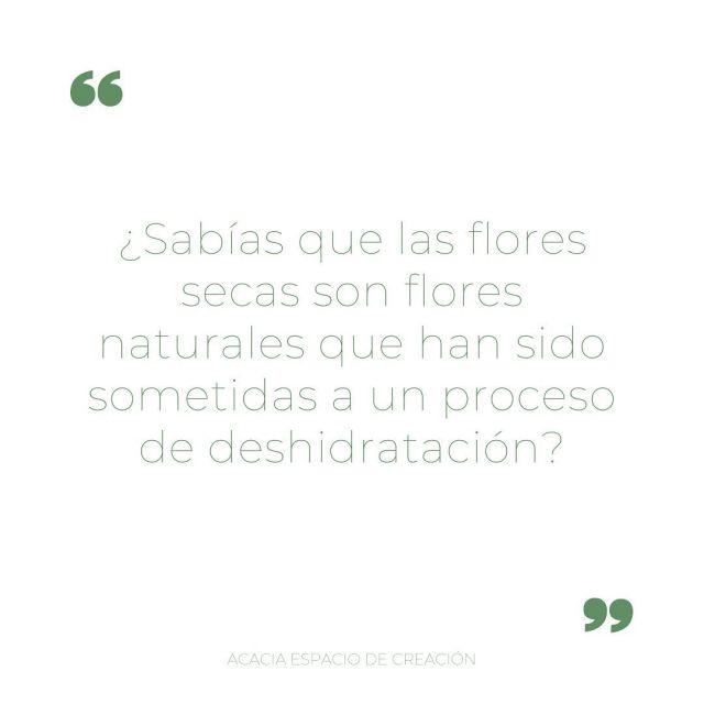 Da un toque romántico a tu hogar con un ramo de flores secas 🌸🤍 . . #flores #flowers #loreak #florseca #ramosdeflores #ramo #tendencia #floristeriaacacia #floristeria #comerciolocal #pequeñocomercio #tafalla #navarra